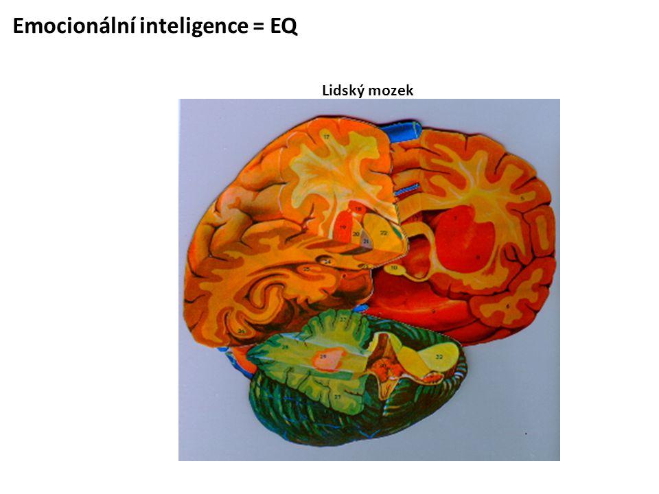 Emocionální inteligence = EQ Lidský mozek