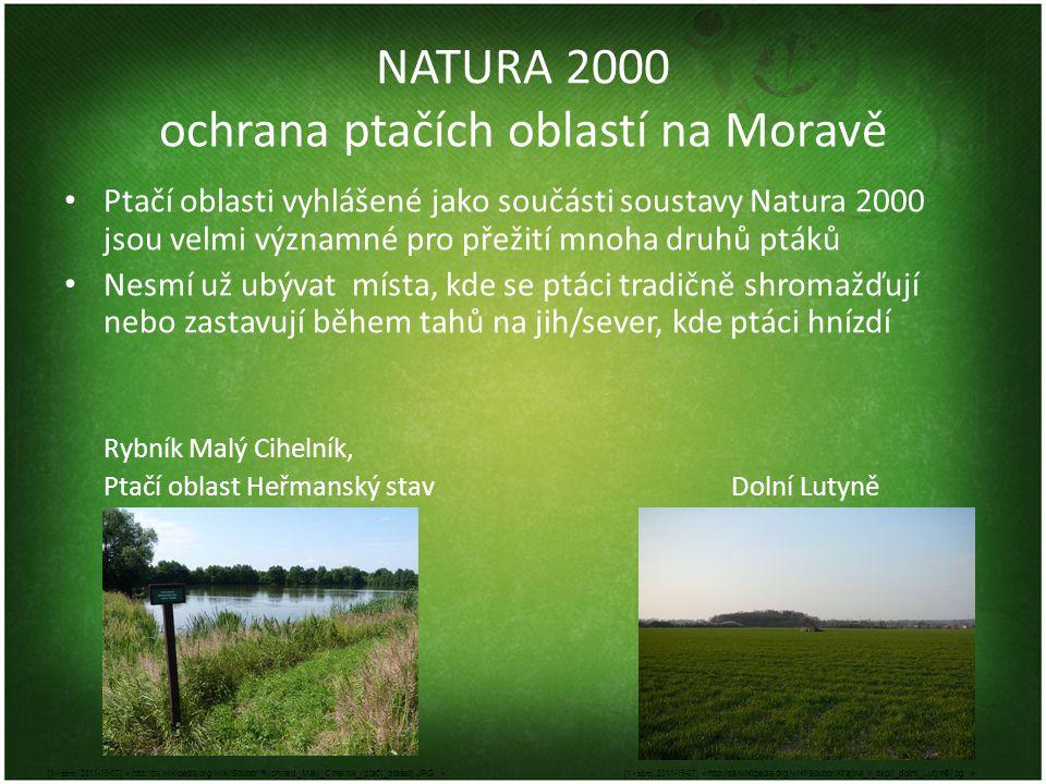 NATURA 2000 ochrana ptačích oblastí na Moravě • Ptačí oblasti vyhlášené jako součásti soustavy Natura 2000 jsou velmi významné pro přežití mnoha druhů