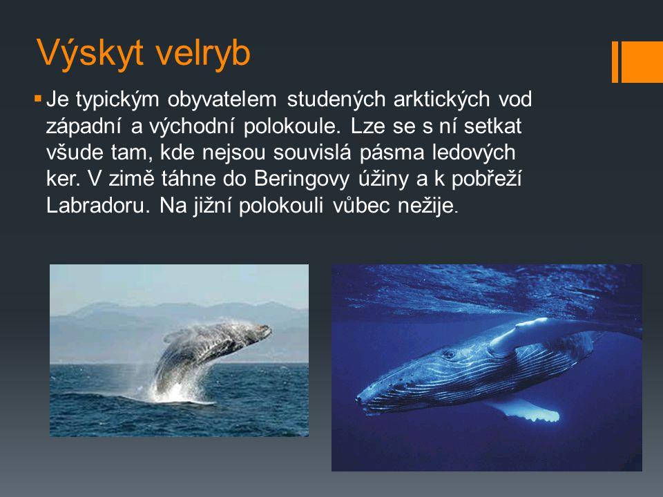 Velryby  Velryba není ryba, ale savec z řádu kytovci. Mimo jiné to znamená také to, že dýchá vzduch stejně jako všichni ostatní savci, tedy i člověk.