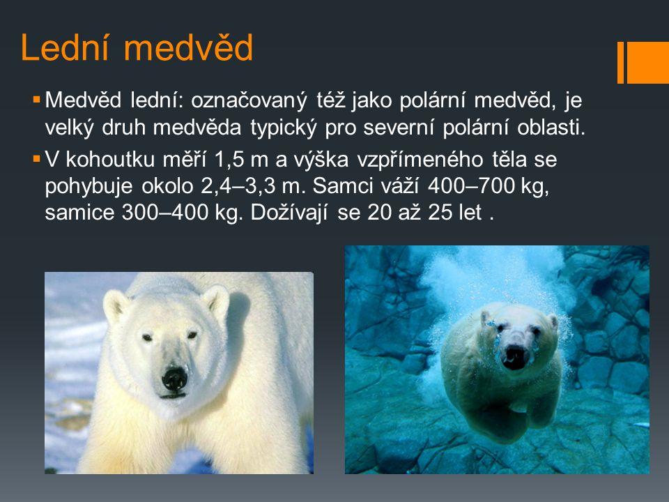 Arktida a Antarktida ohrožené zvířata Zpracoval : Marek Kadlec, Martin Drož, Karel Slivanský