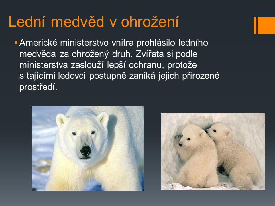 Výskyt  Vyskytuje se v Grónsku, na severním pobřeží Severní Ameriky a Asie. Na všech těchto územích je chráněn a jeho lov se kontroluje. V současnost