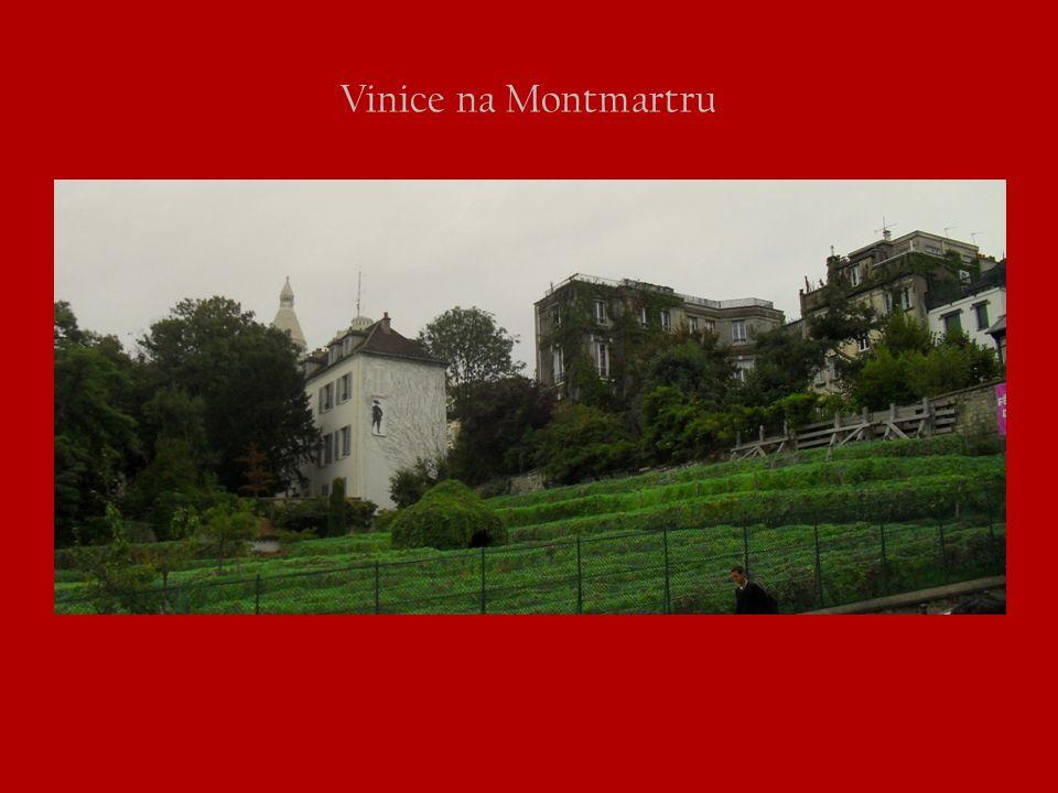 Vinice na Montmartru