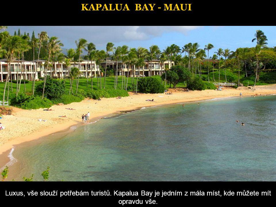 VIEWS OF MAUI Rostlinstvo ostrova