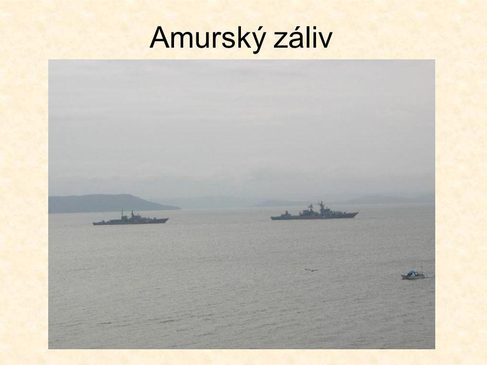 Amurský záliv
