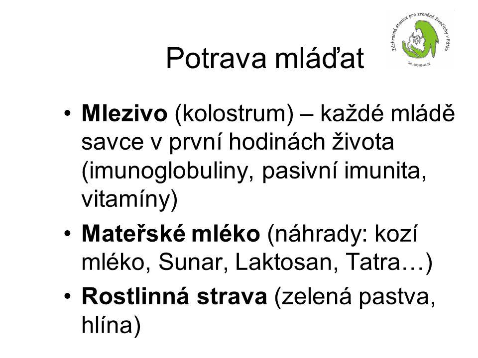 Potrava mláďat •Mlezivo (kolostrum) – každé mládě savce v první hodinách života (imunoglobuliny, pasivní imunita, vitamíny) •Mateřské mléko (náhrady: