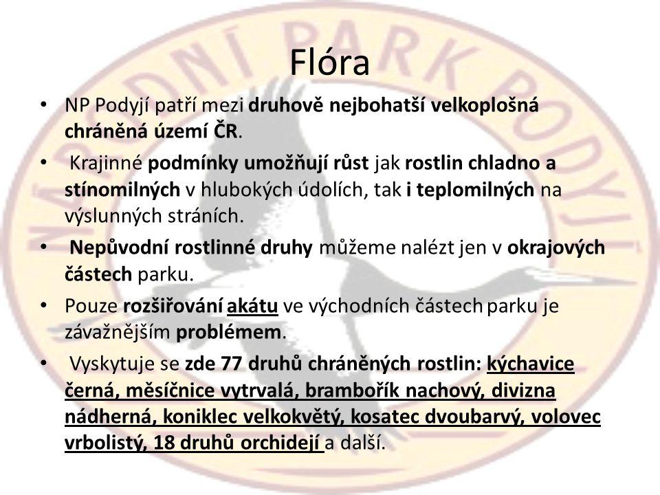 Flóra • NP Podyjí patří mezi druhově nejbohatší velkoplošná chráněná území ČR. • Krajinné podmínky umožňují růst jak rostlin chladno a stínomilných v