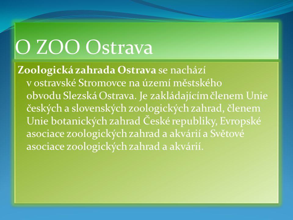 Co nám cesta do ZOO Ostrava dala?  Naučili jsme se hodně nového o všech šelmách.  Řekli jsme si, kde takové šelmy žijou.  Jmenovali jsme šelmy, kte