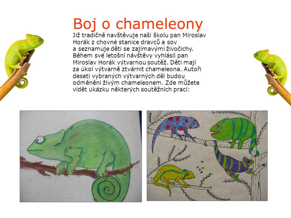 Boj o chameleony Již tradičně navštěvuje naši školu pan Miroslav Horák z chovné stanice dravců a sov a seznamuje děti se zajímavými živočichy. Během s