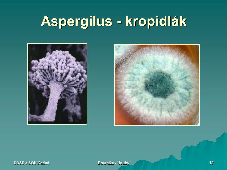 SOŠS a SOU Kadaň Botanika - Houby 18 Aspergilus - kropidlák