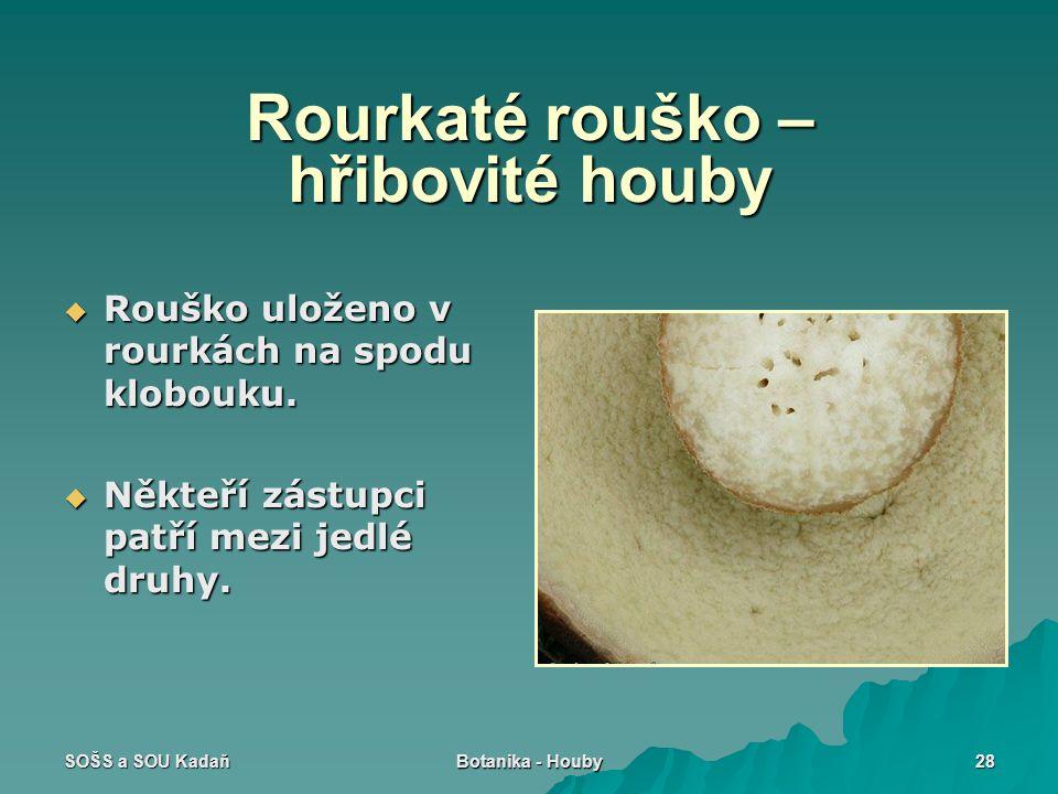 SOŠS a SOU Kadaň Botanika - Houby 28 Rourkaté rouško – hřibovité houby  Rouško uloženo v rourkách na spodu klobouku.  Někteří zástupci patří mezi je