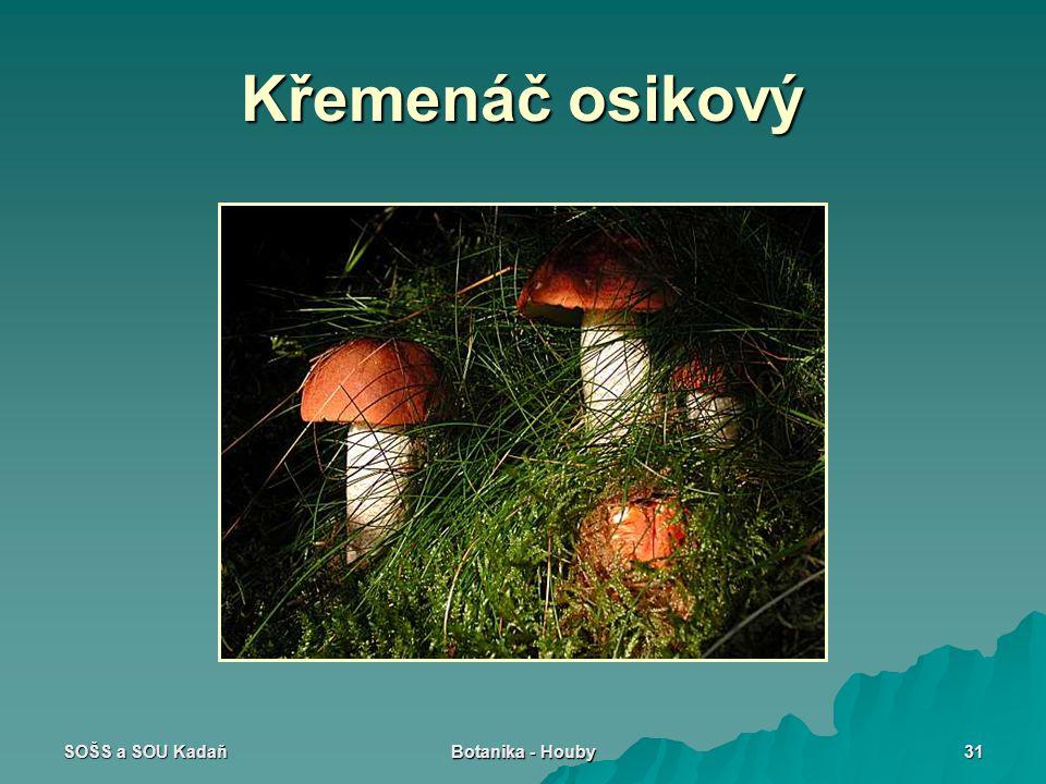 SOŠS a SOU Kadaň Botanika - Houby 31 Křemenáč osikový