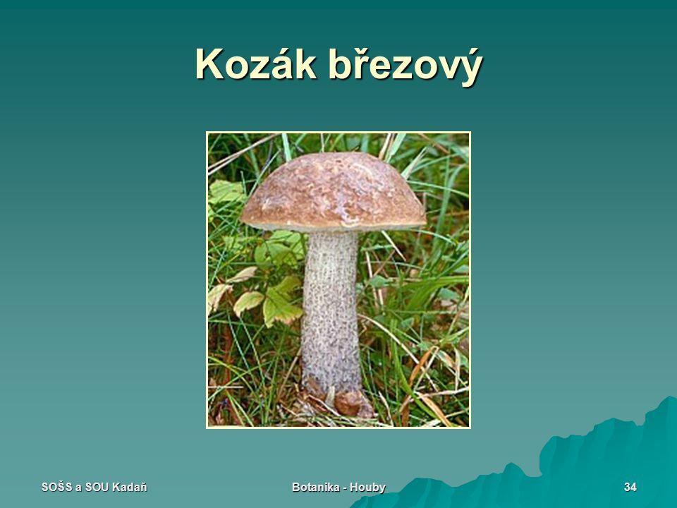 SOŠS a SOU Kadaň Botanika - Houby 34 Kozák březový