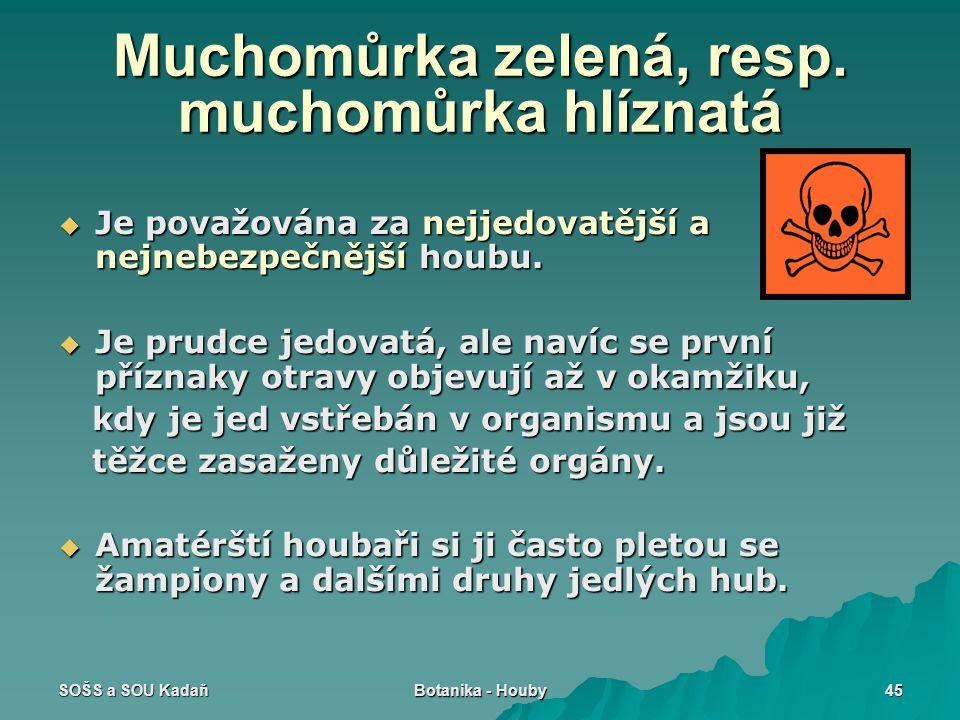 SOŠS a SOU Kadaň Botanika - Houby 45 Muchomůrka zelená, resp. muchomůrka hlíznatá  Je považována za nejjedovatější a nejnebezpečnější houbu.  Je pru