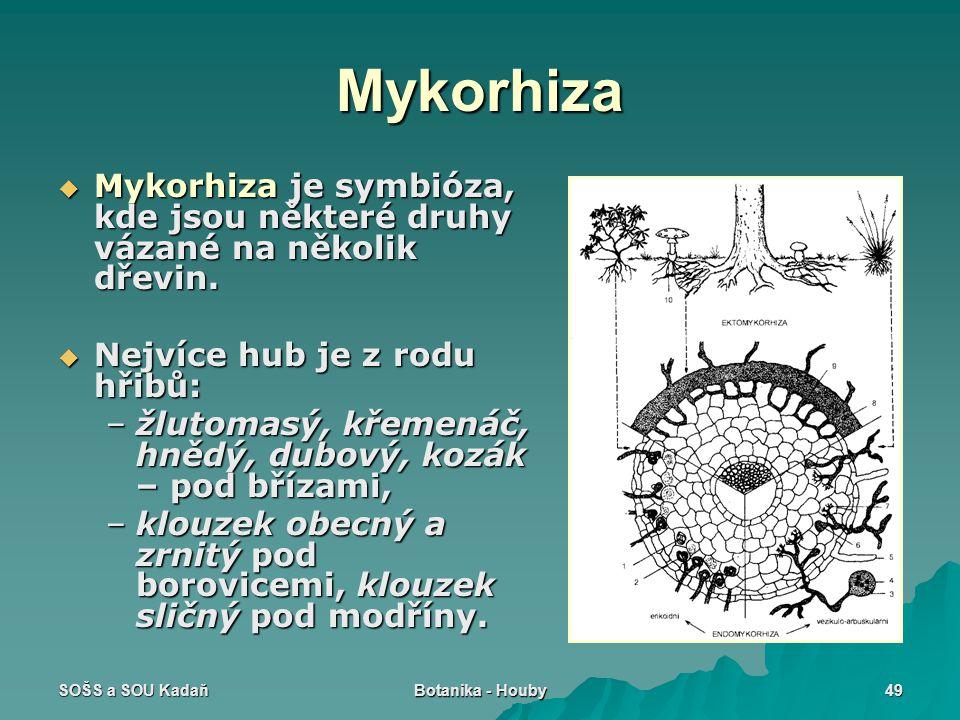 SOŠS a SOU Kadaň Botanika - Houby 49 Mykorhiza  Mykorhiza je symbióza, kde jsou některé druhy vázané na několik dřevin.  Nejvíce hub je z rodu hřibů