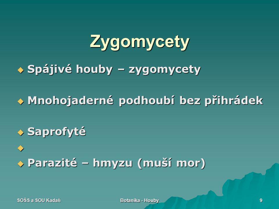 SOŠS a SOU Kadaň Botanika - Houby 9 Zygomycety  Spájivé houby – zygomycety  Mnohojaderné podhoubí bez přihrádek  Saprofyté   Parazité – hmyzu (mu