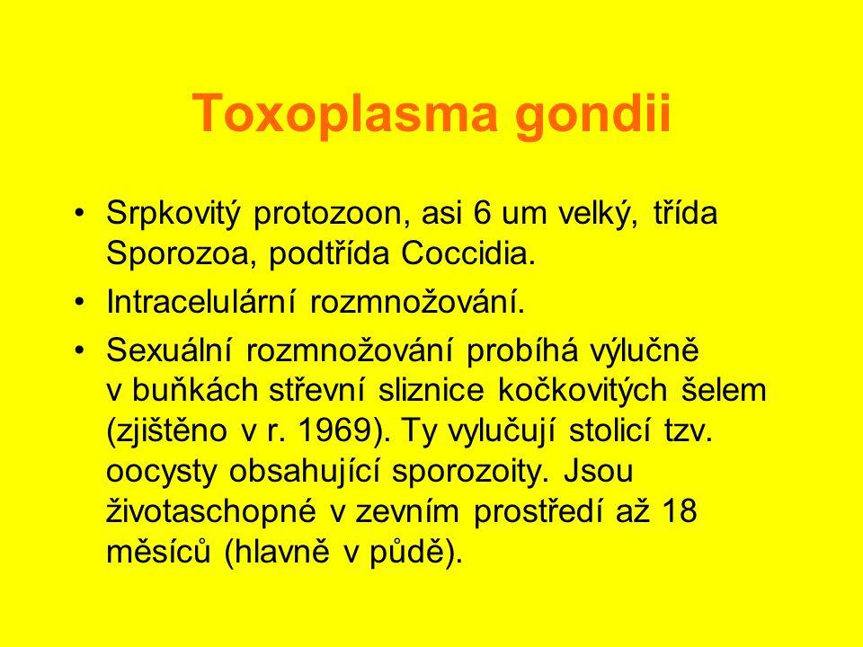 Toxoplasma gondii •Srpkovitý protozoon, asi 6 um velký, třída Sporozoa, podtřída Coccidia. •Intracelulární rozmnožování. •Sexuální rozmnožování probíh