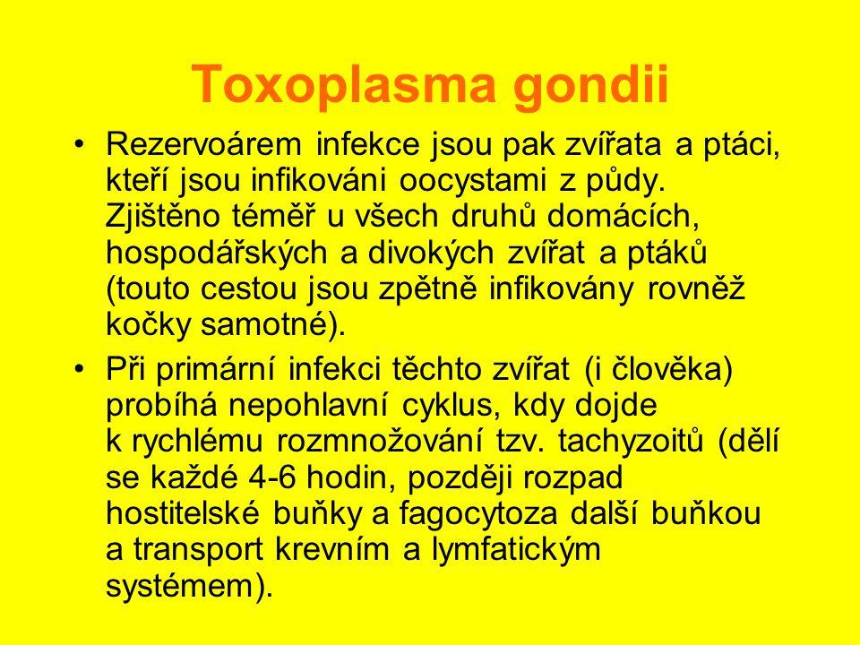 Toxoplasma gondii •Rezervoárem infekce jsou pak zvířata a ptáci, kteří jsou infikováni oocystami z půdy. Zjištěno téměř u všech druhů domácích, hospod