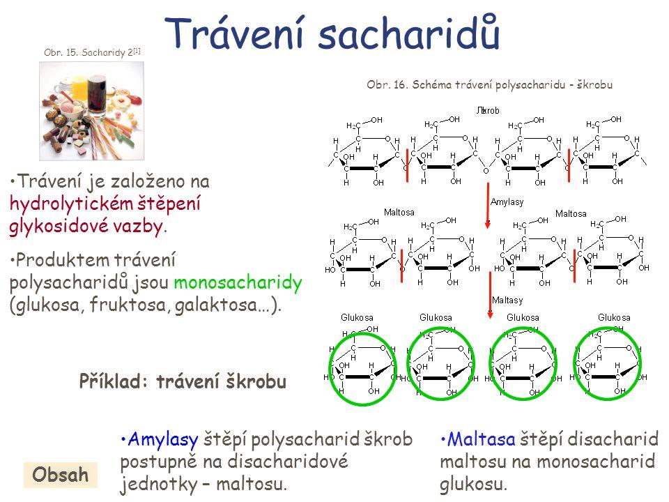 Trávení sacharidů •Trávení je založeno na hydrolytickém štěpení glykosidové vazby. •Amylasy štěpí polysacharid škrob postupně na disacharidové jednotk
