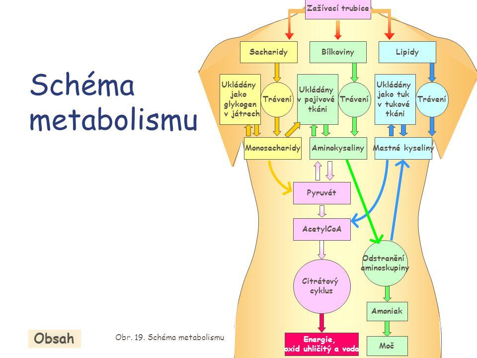 Schéma metabolismu Zažívací trubice SacharidyBílkovinyLipidy MonosacharidyAminokyselinyMastné kyseliny Trávení Ukládány jako glykogen v játrech Ukládá