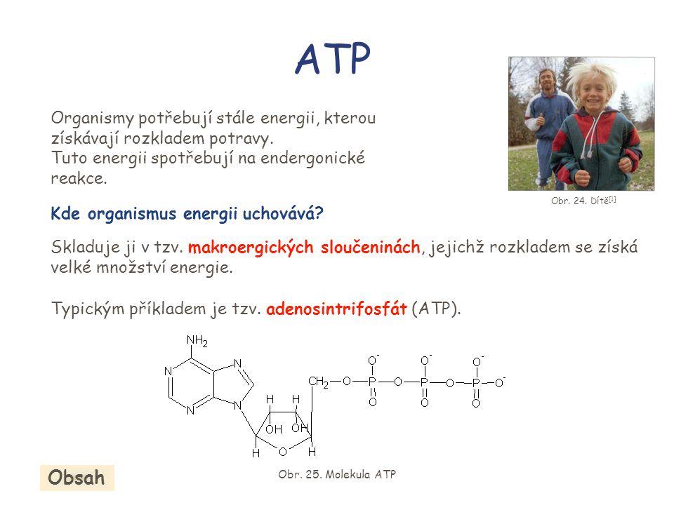 ATP Organismy potřebují stále energii, kterou získávají rozkladem potravy. Tuto energii spotřebují na endergonické reakce. Kde organismus energii ucho