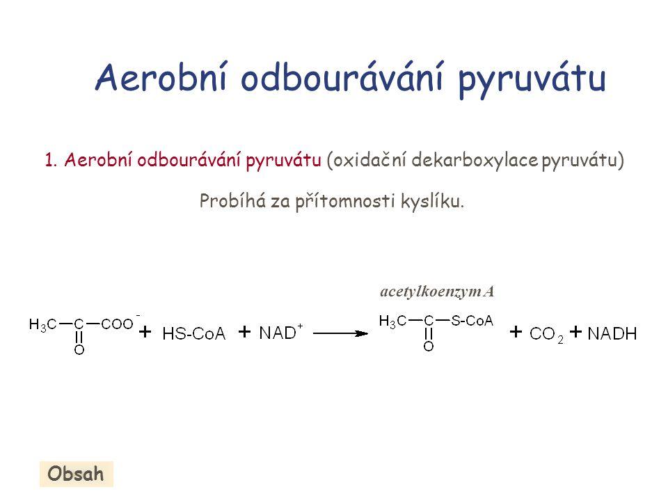 Aerobní odbourávání pyruvátu 1. Aerobní odbourávání pyruvátu (oxidační dekarboxylace pyruvátu) Probíhá za přítomnosti kyslíku. acetylkoenzym A Obsah