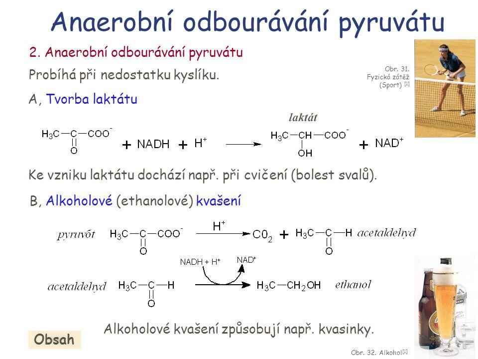 B, Alkoholové (ethanolové) kvašení Alkoholové kvašení způsobují např. kvasinky. Anaerobní odbourávání pyruvátu Obr. 32. Alkohol [1] 2. Anaerobní odbou