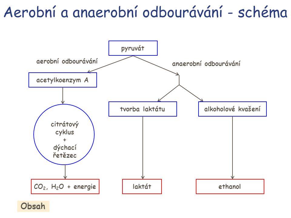 Aerobní a anaerobní odbourávání - schéma pyruvát aerobní odbourávání anaerobní odbourávání acetylkoenzym A citrátový cyklus + dýchací řetězec CO 2, H
