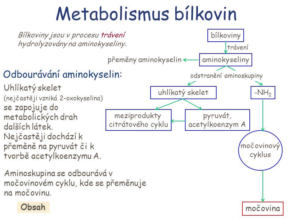 bílkoviny aminokyseliny trávení uhlíkatý skelet-NH 2 meziprodukty citrátového cyklu pyruvát, acetylkoenzym A Metabolismus bílkovin Bílkoviny jsou v pr
