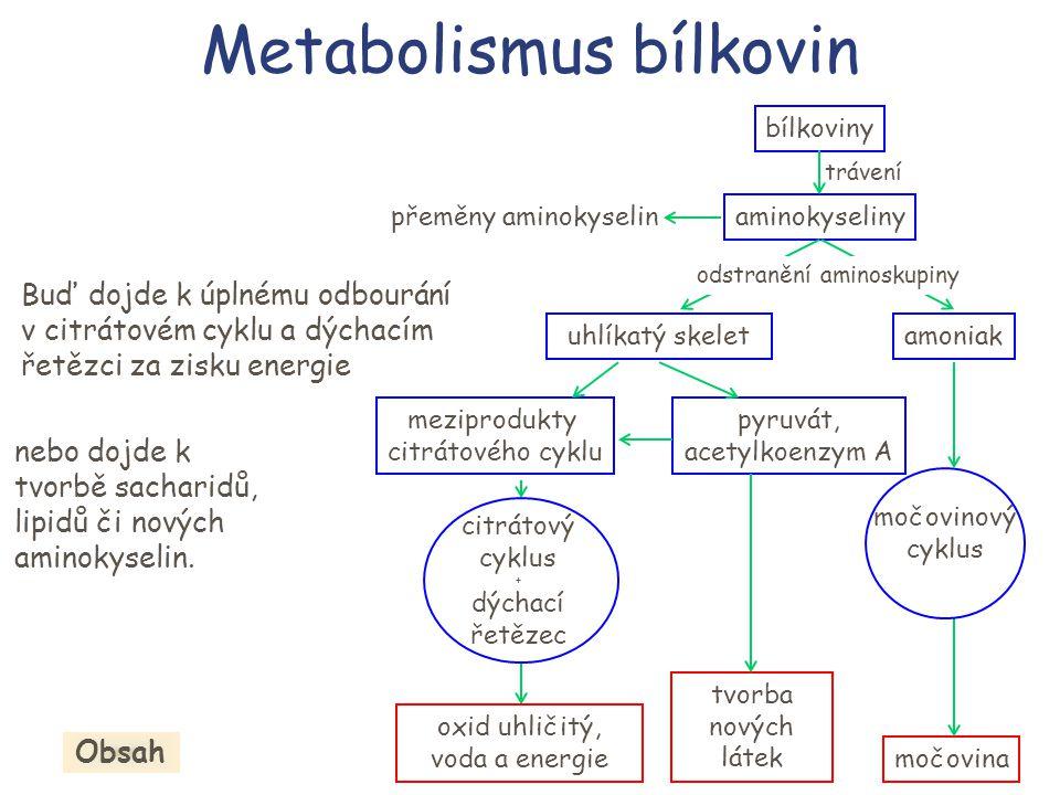 bílkoviny aminokyseliny trávení močovinový cyklus močovina uhlíkatý skelet citrátový cyklus + dýchací řetězec amoniak meziprodukty citrátového cyklu p