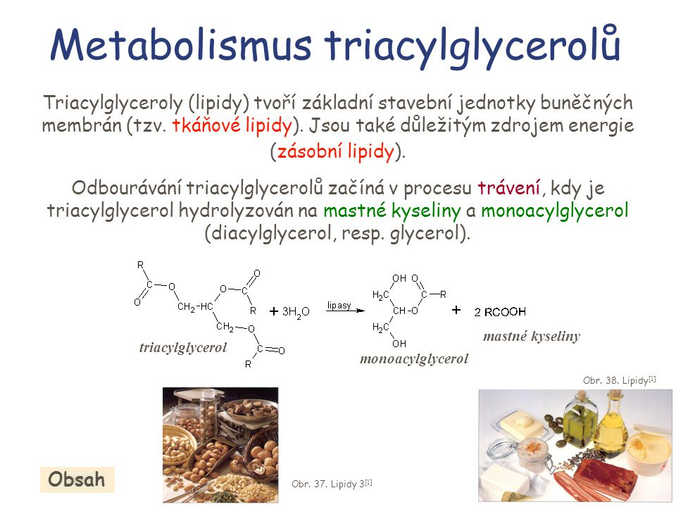 Metabolismus triacylglycerolů Triacylglyceroly (lipidy) tvoří základní stavební jednotky buněčných membrán (tzv. tkáňové lipidy). Jsou také důležitým