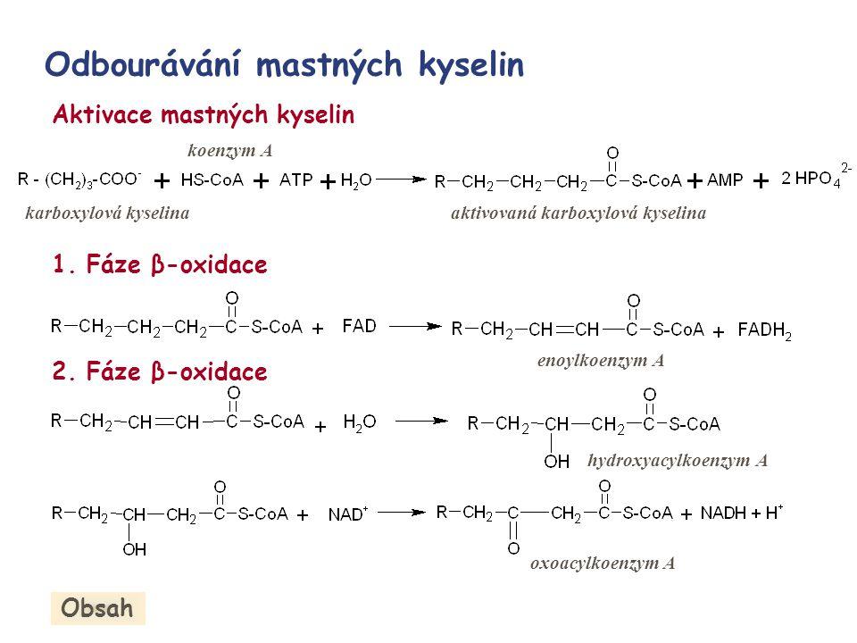 Odbourávání mastných kyselin Aktivace mastných kyselin 1. Fáze β-oxidace 2. Fáze β-oxidace karboxylová kyselina koenzym A aktivovaná karboxylová kysel