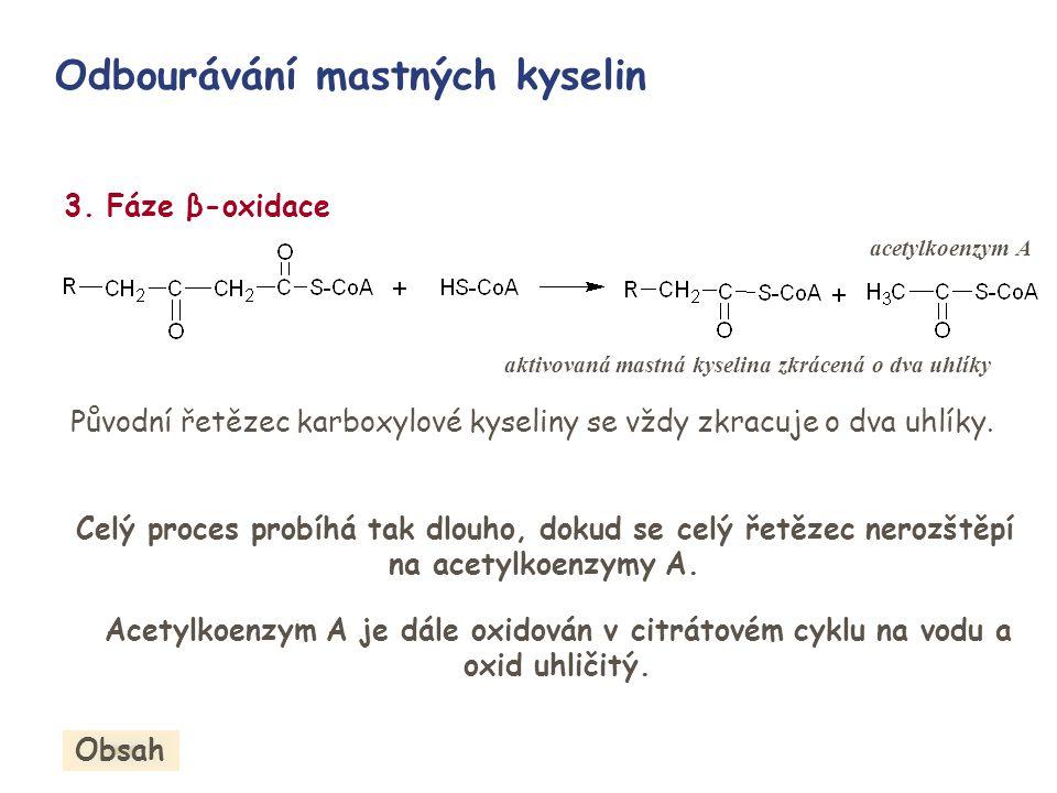 3. Fáze β-oxidace aktivovaná mastná kyselina zkrácená o dva uhlíky Odbourávání mastných kyselin acetylkoenzym A Původní řetězec karboxylové kyseliny s