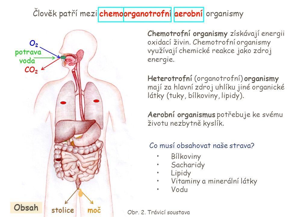 O2O2 CO 2 potrava voda stolicemoč Člověk patří mezi chemoorganotrofní aerobní organismy Chemotrofní organismy získávají energii oxidací živin. Chemotr
