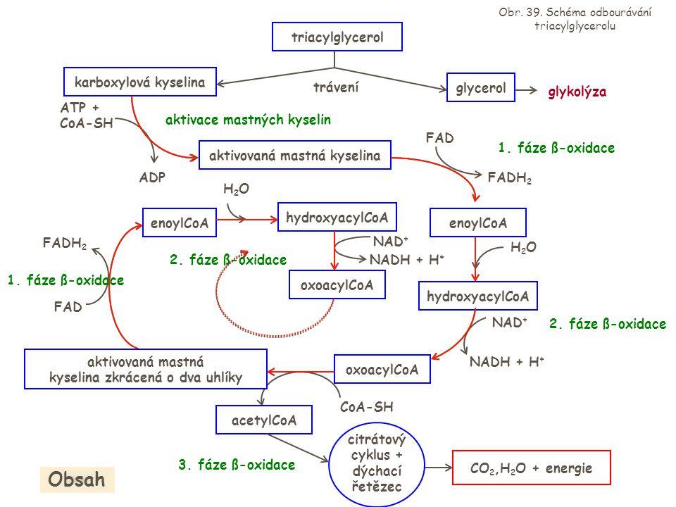 triacylglycerol trávení karboxylová kyselina glycerol glykolýza ATP + CoA-SH ADP aktivovaná mastná kyselina FADH 2 FAD enoylCoA H2OH2O hydroxyacylCoA