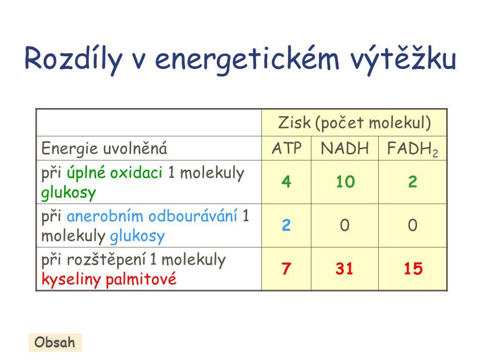 Rozdíly v energetickém výtěžku Zisk (počet molekul) Energie uvolněnáATPNADHFADH 2 při úplné oxidaci 1 molekuly glukosy 4102 při anerobním odbourávání