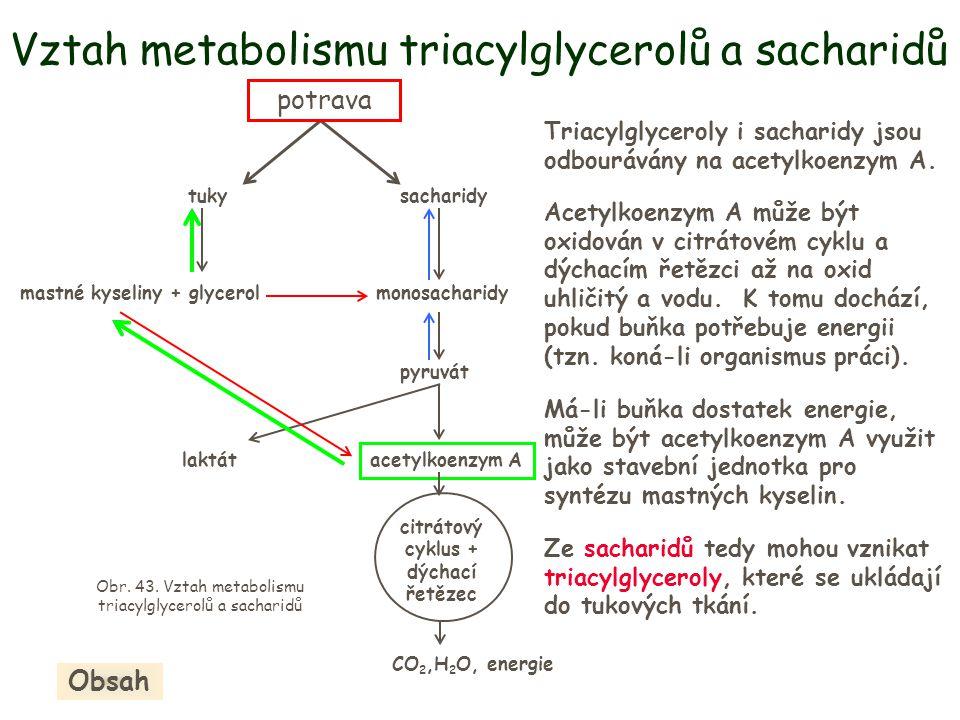 Vztah metabolismu triacylglycerolů a sacharidů tukysacharidy pyruvát acetylkoenzym A potrava mastné kyseliny + glycerolmonosacharidy laktát citrátový