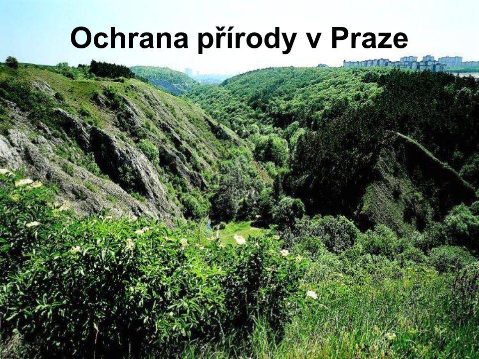 Některé přírodní parky •Botič-Milíčov (Praha 10) - údolní nivy přirozeně meandrujícího Botiče a Pitkovického potoka, obsahuje zvláště chráněná území Pitkovická stráň a Milíčovský les a rybníky.