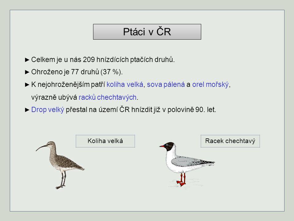 Ptáci v ČR ► Celkem je u nás 209 hnízdících ptačích druhů. ► Ohroženo je 77 druhů (37 %). ► K nejohroženějším patří koliha velká, sova pálená a orel m