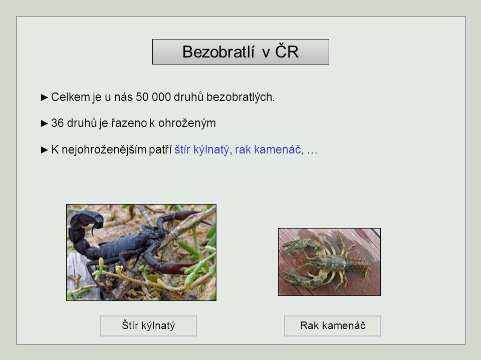 Bezobratlí v ČR ► Celkem je u nás 50 000 druhů bezobratlých. ► 36 druhů je řazeno k ohroženým ► K nejohroženějším patří štír kýlnatý, rak kamenáč, … Š