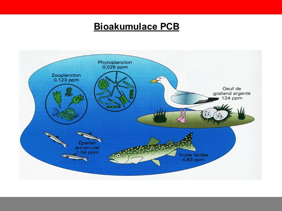 Bioakumulace PCB