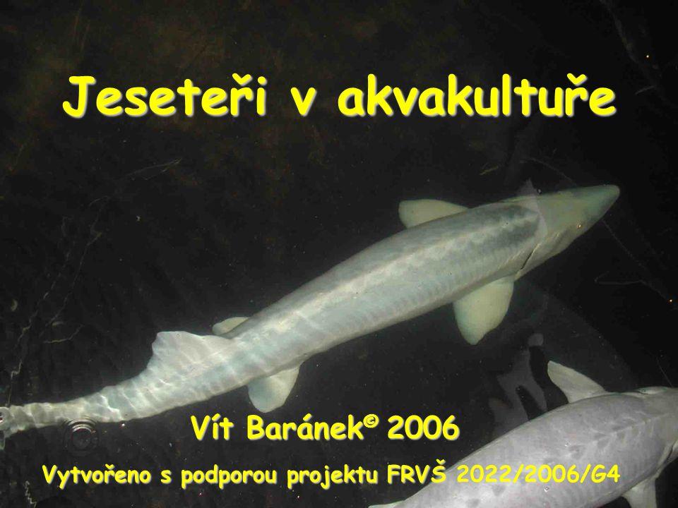 Jeseteři v akvakultuře Vít Baránek © 2006 Vytvořeno s podporou projektu FRVŠ Vytvořeno s podporou projektu FRVŠ 2022/2006/G4