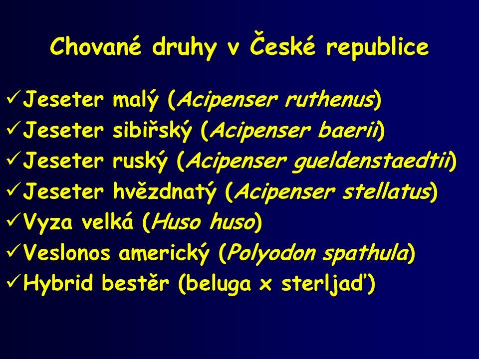 Chované druhy v České republice  Jeseter malý (Acipenser ruthenus)  Jeseter sibiřský (Acipenser baerii)  Jeseter ruský (Acipenser gueldenstaedtii)