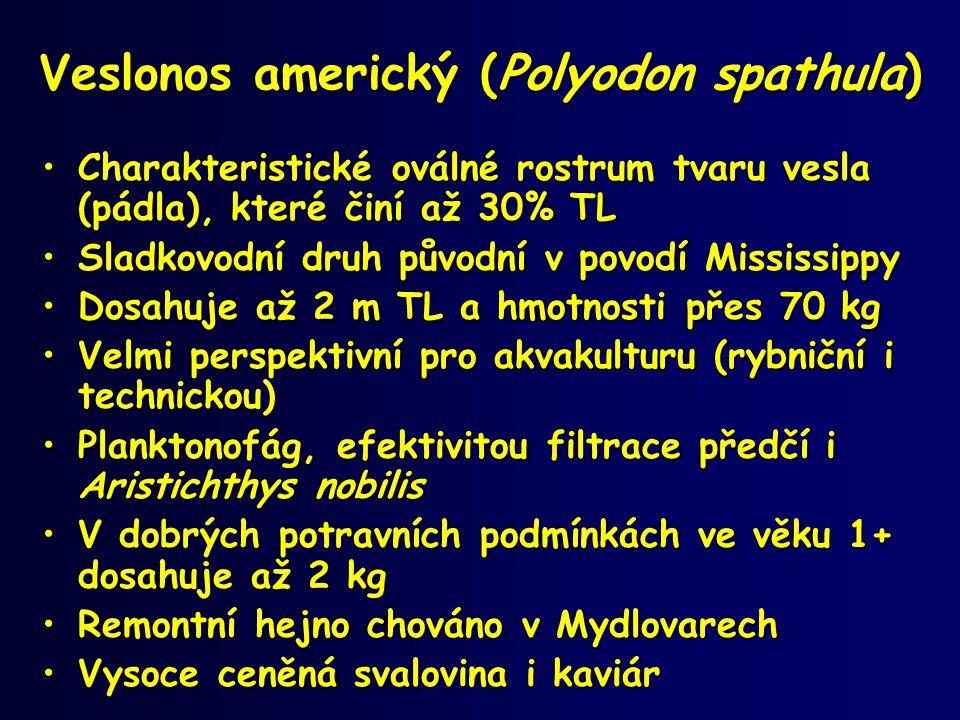 Veslonos americký (Polyodon spathula) •Charakteristické oválné rostrum tvaru vesla (pádla), které činí až 30% TL •Sladkovodní druh původní v povodí Mi