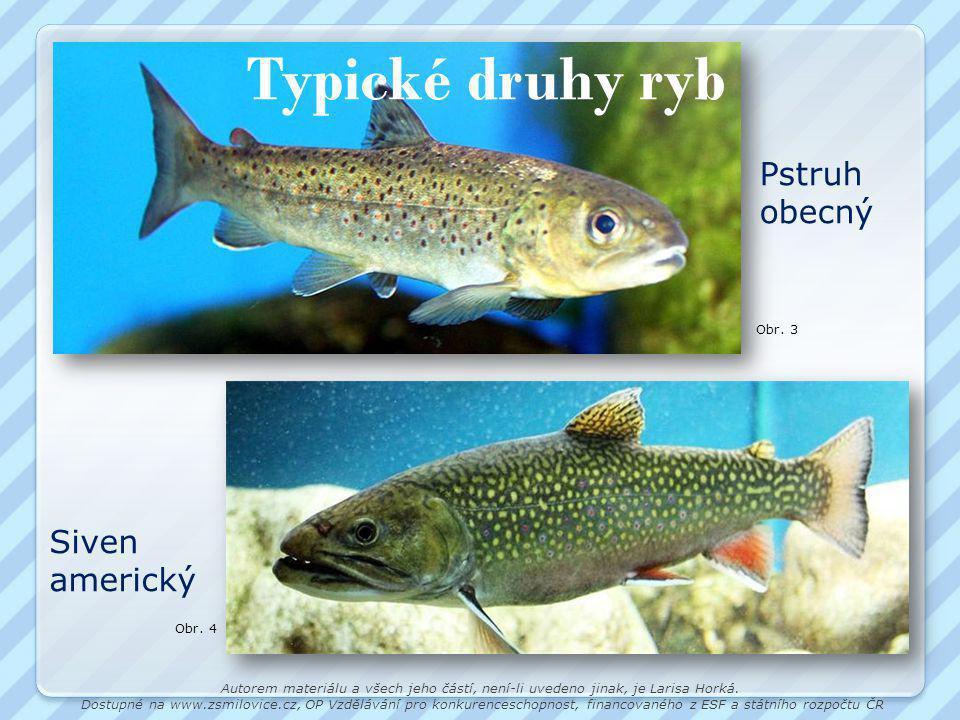 Typické druhy ryb Obr.3 Pstruh obecný Obr.