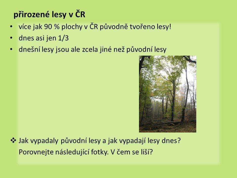 přirozené lesy v ČR • více jak 90 % plochy v ČR původně tvořeno lesy! • dnes asi jen 1/3 • dnešní lesy jsou ale zcela jiné než původní lesy  Jak vypa