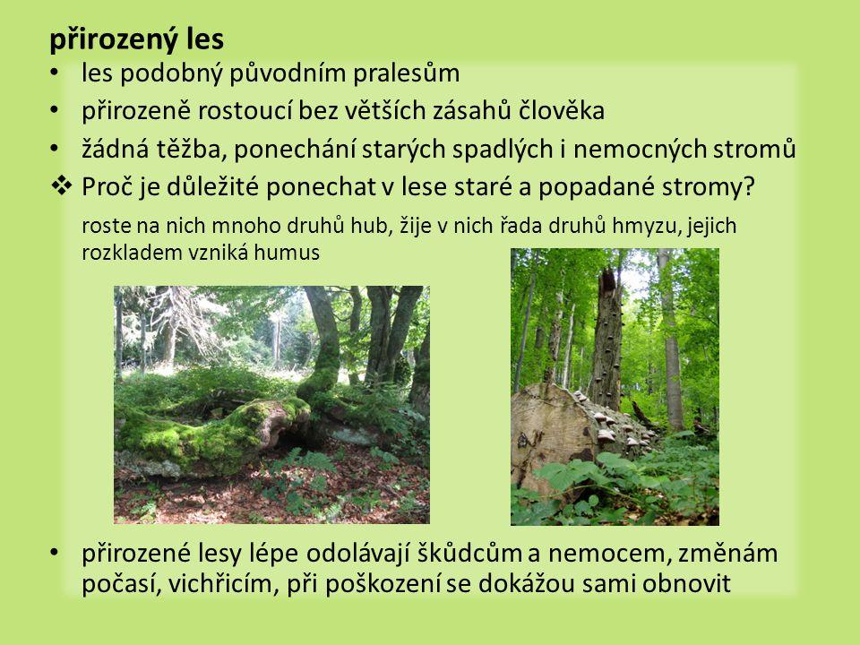 přirozený les • les podobný původním pralesům • přirozeně rostoucí bez větších zásahů člověka • žádná těžba, ponechání starých spadlých i nemocných st