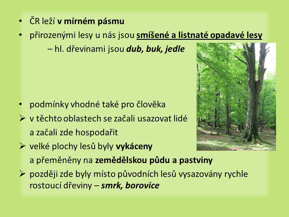 • ČR leží v mírném pásmu • přirozenými lesy u nás jsou smíšené a listnaté opadavé lesy – hl. dřevinami jsou dub, buk, jedle • podmínky vhodné také pro