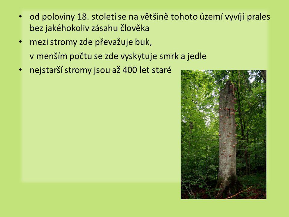 • od poloviny 18. století se na většině tohoto území vyvíjí prales bez jakéhokoliv zásahu člověka • mezi stromy zde převažuje buk, v menším počtu se z