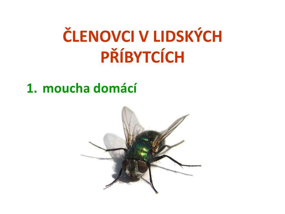 ČLENOVCI V LIDSKÝCH PŘÍBYTCÍCH 8.rybenka domácí  Jedná se o velmi starobylý hmyz.