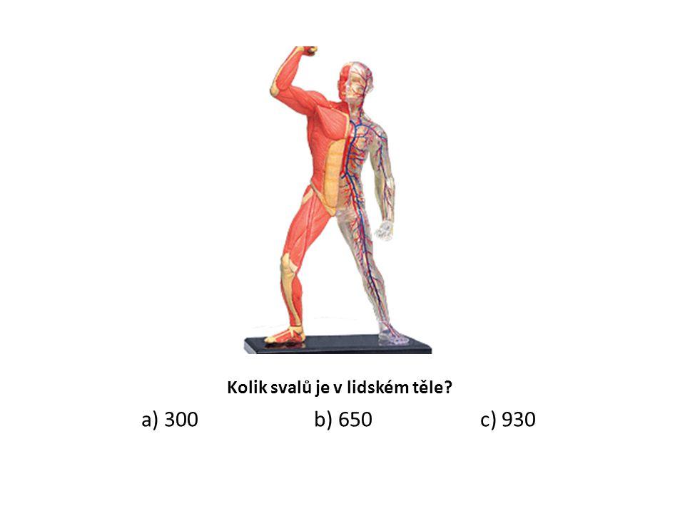 Kolik svalů je v lidském těle? a) 300 b) 650 c) 930